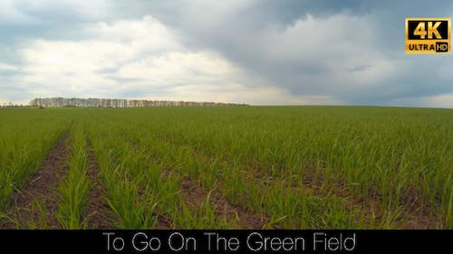 To Go On The Green Field 4