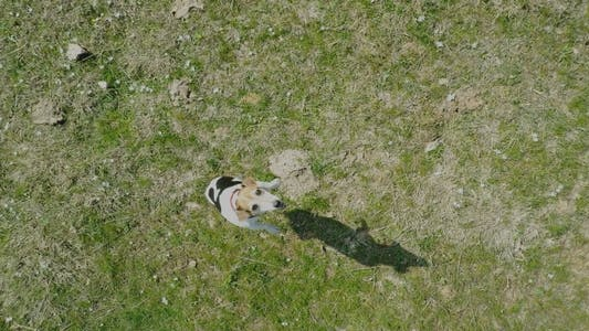 Thumbnail for Dog Filmed with Drone 1