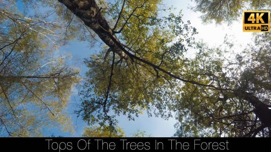 Cover Image for Tops Of The Trees In The Forest 4