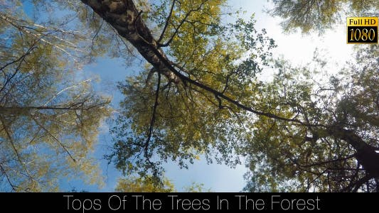 Thumbnail for Tops Of The Trees In The Forest 4