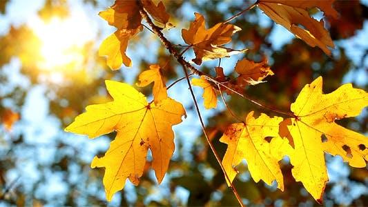 Thumbnail for Autumn Foliage