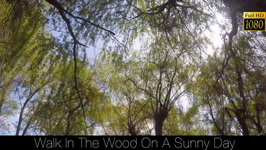 Thumbnail for Walk In The Wood On A Sunny Day
