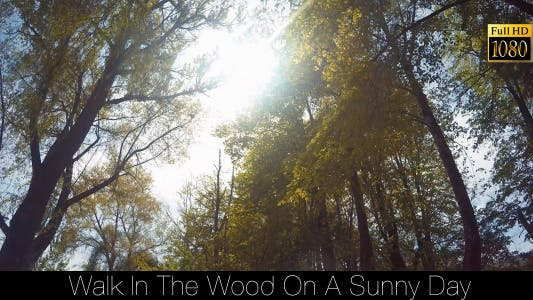 Thumbnail for Walk In The Wood On A Sunny Day 2