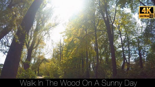 Thumbnail for Walk In The Woods On A Sunny Day 3