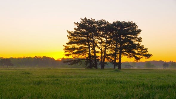 Cover Image for Sunrise in Green Meadow with Six Pines