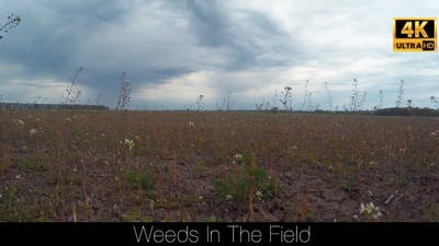 Weeds In The Field 3