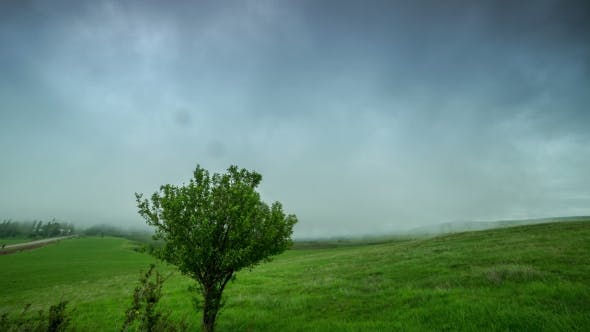 Cover Image for Cloud Mist Covers a Green Field With a Lone Tree In Kazakhstan