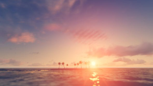 Thumbnail for Palm Trees - Sunset Background