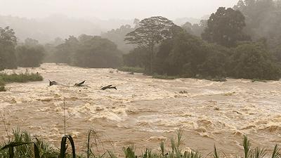 Muddy Flooded River