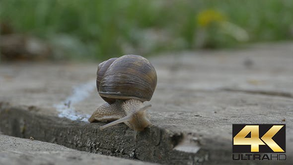 Thumbnail for Snail  Crawling on Plank