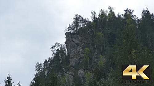 Mountain Cliff and Fir Trees