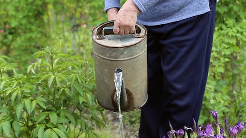 A Woman Pours Water from a Watering Can