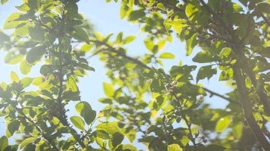 Thumbnail for Sun Shining Through Fall Leaves Blowing In Breeze