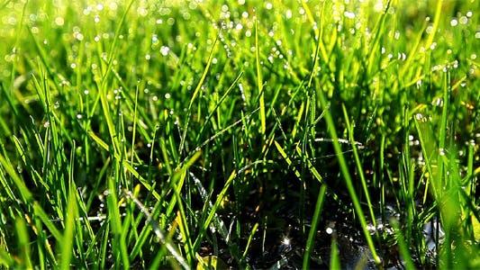 Thumbnail for Green Grass