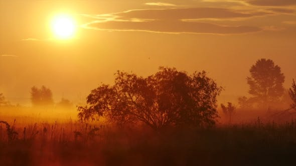 Thumbnail for Fog At Sunset