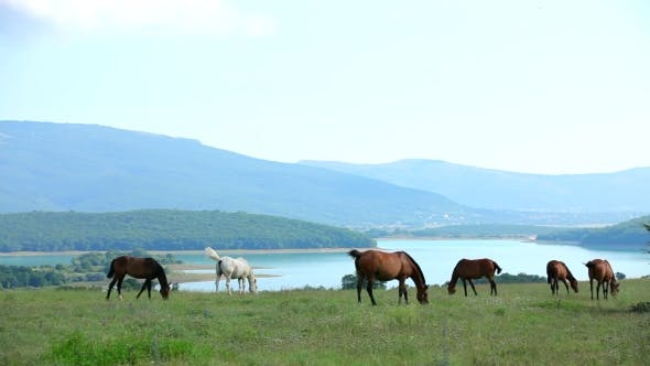 Thumbnail for Herd Of Horses Grazing In Mountain Valley