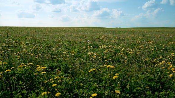 Thumbnail for Summer Fields