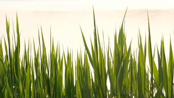 Thumbnail for Grass