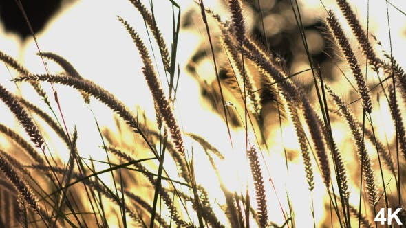 Thumbnail for Grass In Summer