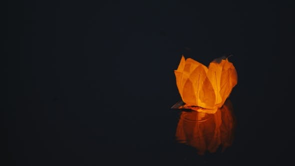 Thumbnail for Glowing Paper Lantern a Flower Shape Floats On Water