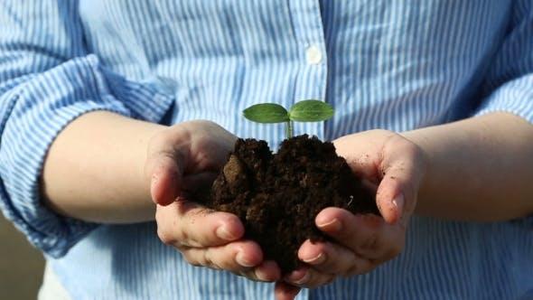 Thumbnail for Weibliche Hände halten einen kleinen grünen Sprout