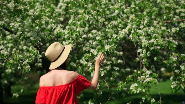 Thumbnail for Morning In The Garden. Girl In The Blooming Bush Of Apple Tree