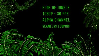 Edge of Jungle