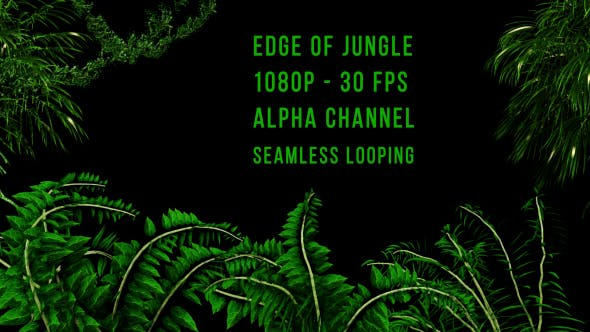 Thumbnail for Edge of Jungle