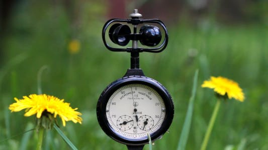 Cover Image for The Anemometer On The Background Of Wild Flowers