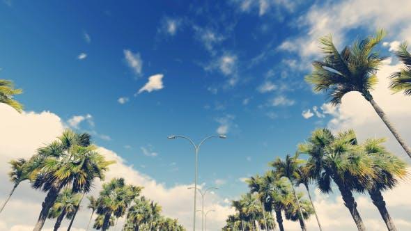 Thumbnail for Driving Through PalmTrees - Noon