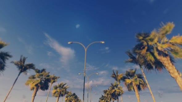 Driving Through Palm Trees - Sunset
