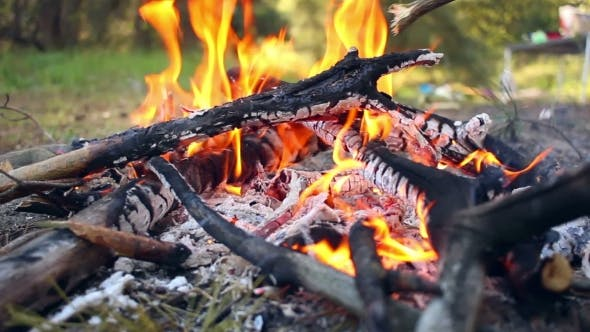 Thumbnail for Bonfire In Forest. Wooden Camp Fire. Campfire Is Burning. Nature Background