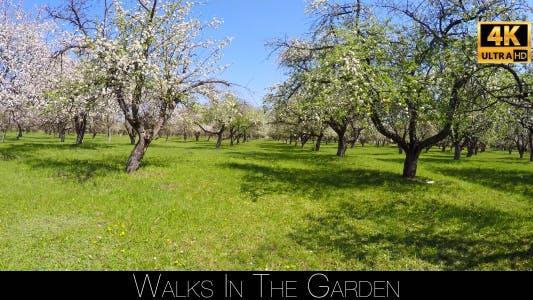 Thumbnail for Walks In The Garden 2