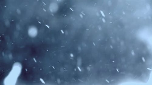 Snow Falling In