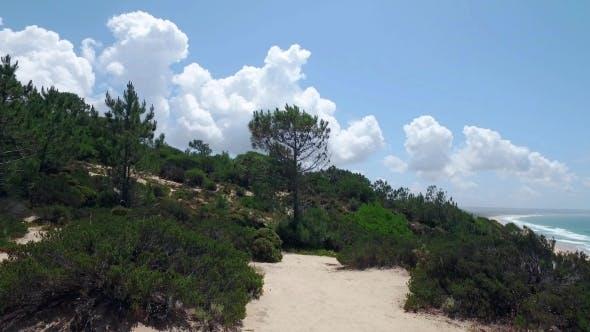 Thumbnail for Walk Through Wooded Hills Near Shore Ocean