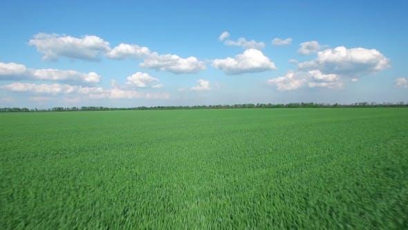 Thumbnail for Green Grass Field