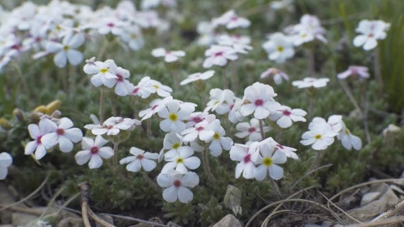 Thumbnail for Small White Flowers