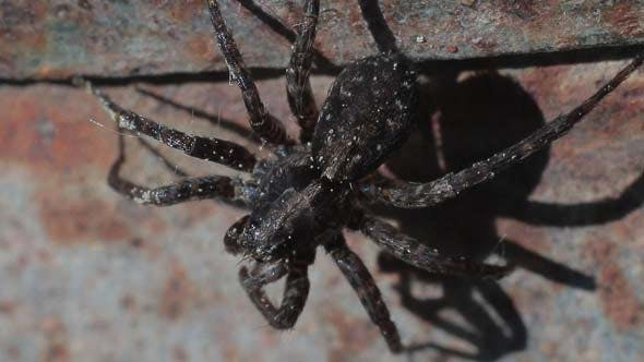 Cover Image for Spider Moves its Legs is Frightened and Runs Away