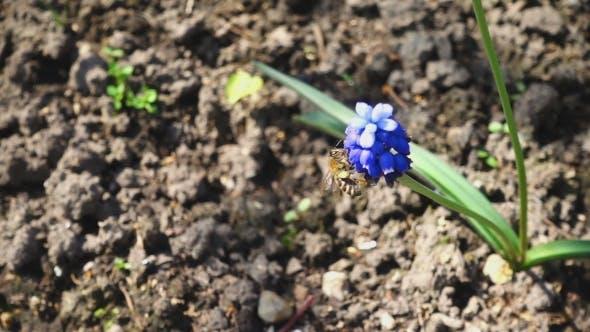 Thumbnail for Bee Flying Near Purple Flower