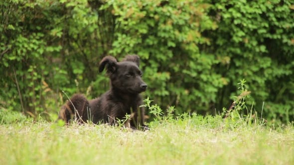 Thumbnail for Homeless Dog Sitting In The Grass