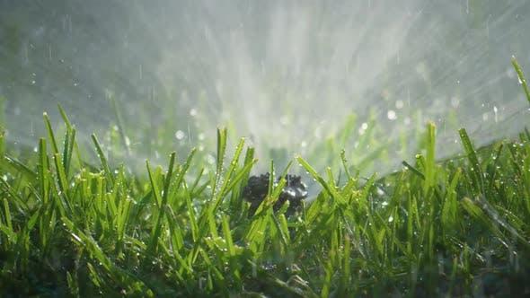 Fresh Watered Grass in the Garden