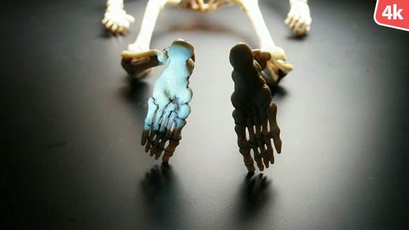 Thumbnail for Human Skeleton 303