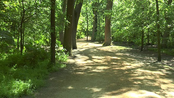 Thumbnail for Forest Road on a Sunny Day
