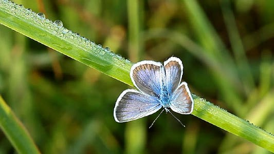 Thumbnail for Butterfly