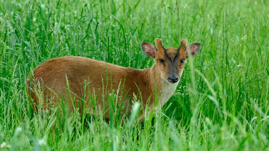 Animal Gazelle