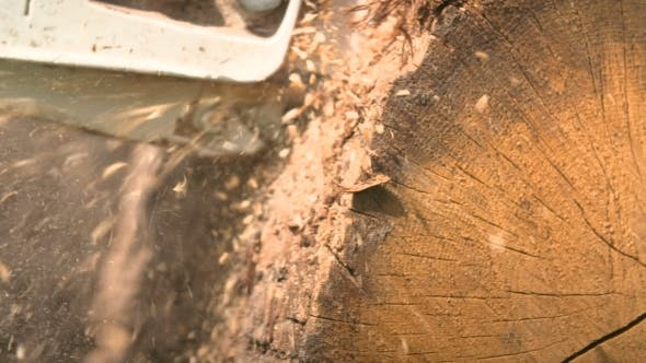 Thumbnail for Cutting Through Wood With Chainsaw In .