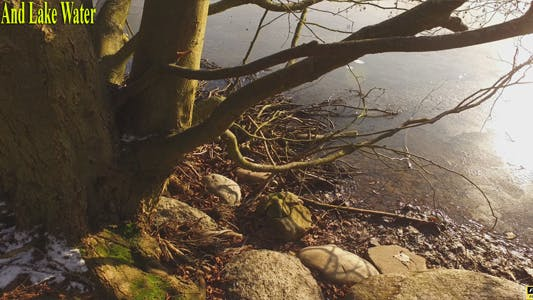 Thumbnail for Tree And Lake Water