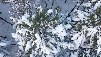 Pine Forest Hilltop Aerial Winter