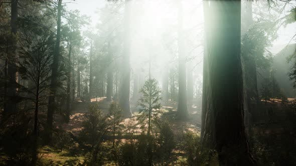 Thumbnail for Sequoia National Park Under the Fog Mist Clouds