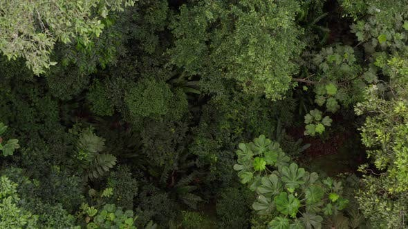 Zooming out from a tropical forest floor revealing the forest canopy
